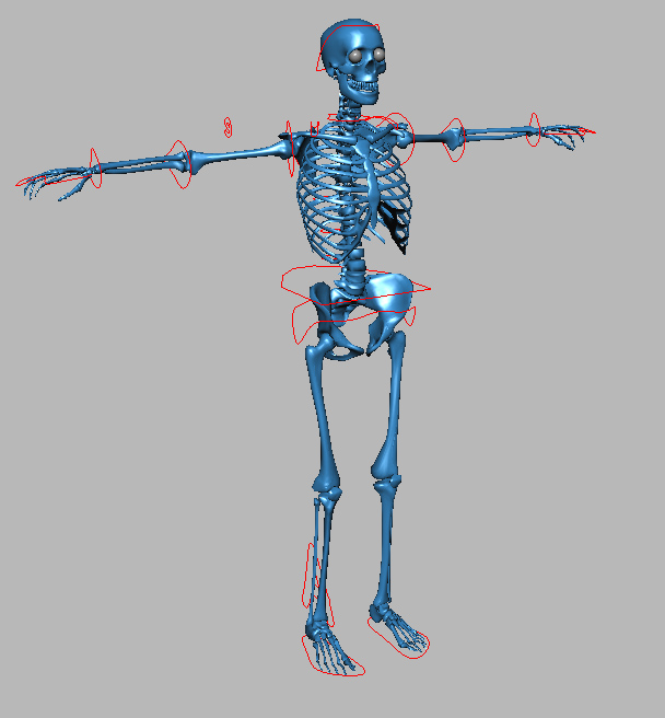 CGTalk | Muscle Rigging but not Simulation?